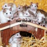 Effective Ways to Seal your House from Mice