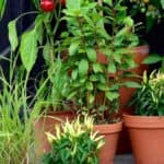 15 Container Gardening Mistakes to Avoid