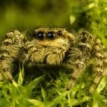 Should You Worry About Spiders in the Grass?