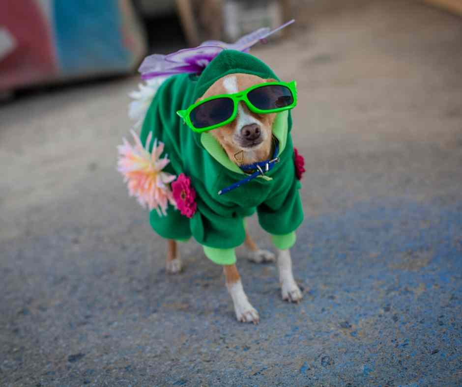 6 Best Dog Halloween Costumes